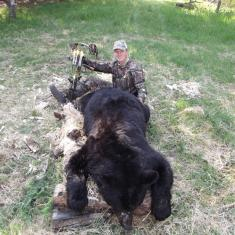 Huge 330 Lb Black Bear with a Bow