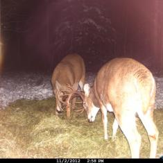 Rut is kicking In